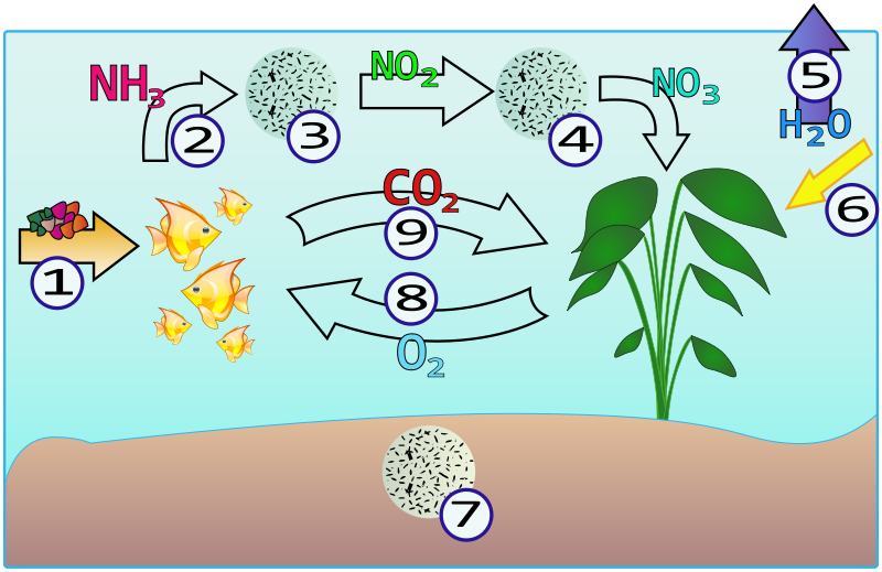 Азотное удобрение в аквариум